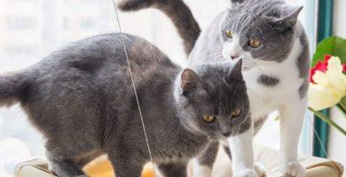 Hamaca de gatos para ventana