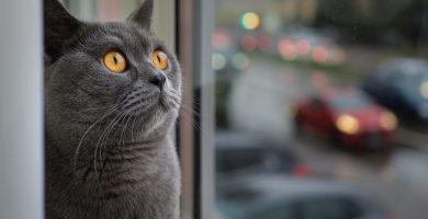 Modelos Hamacas para gatos ventana
